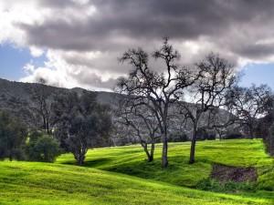 Postal: Árboles sobre la hierba verde