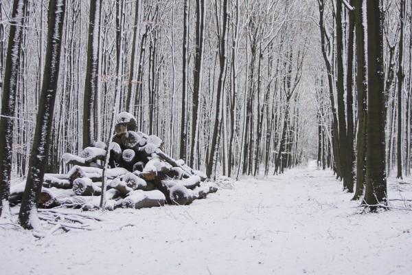 Camino nevado entre árboles