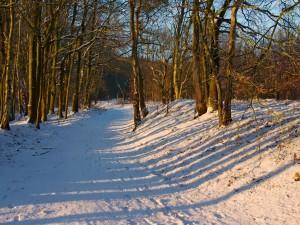La luz del sol en el suelo nevado