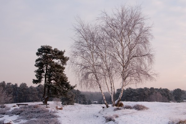 Árbol sin hojas sobre un campo nevado