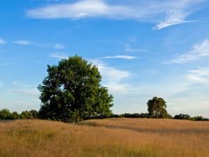 Postal: Un cielo azul sobre el campo