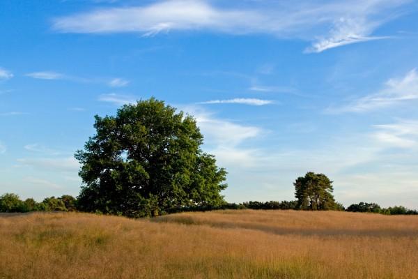 Un cielo azul sobre el campo