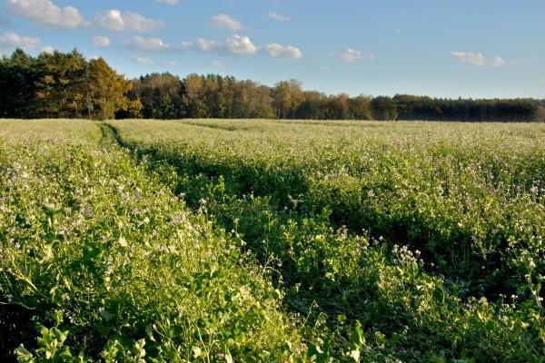Un extenso campo de flores