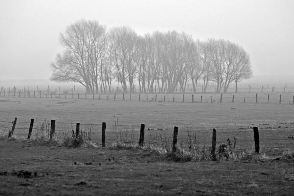 Frío y niebla en el campo