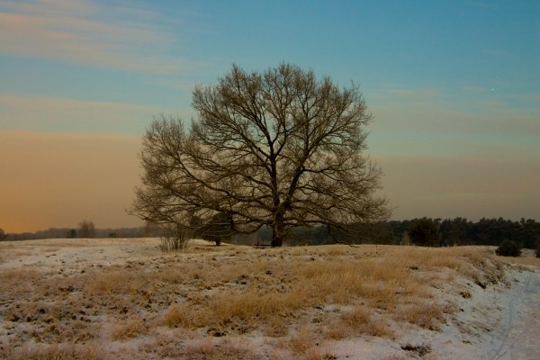 Un árbol en un campo teñido de blanco
