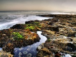 Vida marina en la playa
