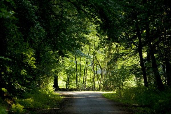 Camino en sombra