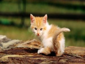 Gatito mirando atrás