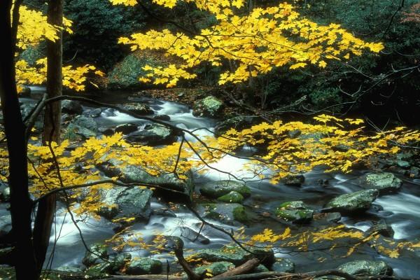 Árbol con hojas otoñales en el río