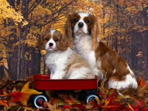 Postal: Foto de la familia canina