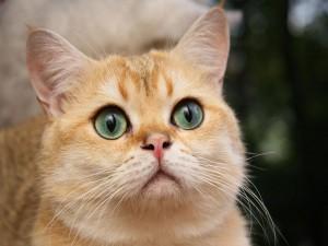Postal: Un gato observador
