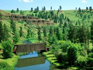 Vista de un puente cubierto en la naturaleza