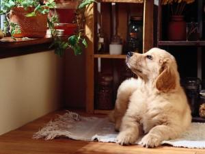 Postal: Un bonito perro mirando las plantas