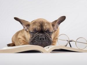 Postal: Perrito dormido sobre un libro