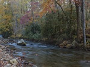 Piedras y hojas otoñales en el río