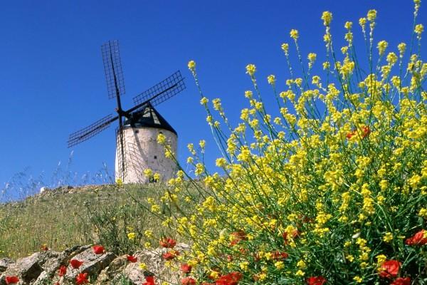 Molino de viento y flores