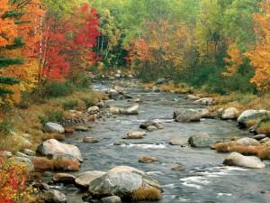 Postal: Paisaje otoñal en el río