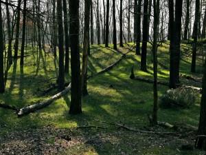 Troncos de árbol
