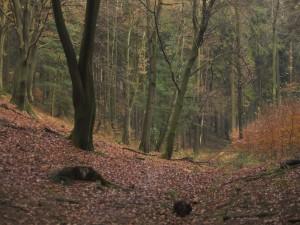 Postal: Un gran bosque en otoño