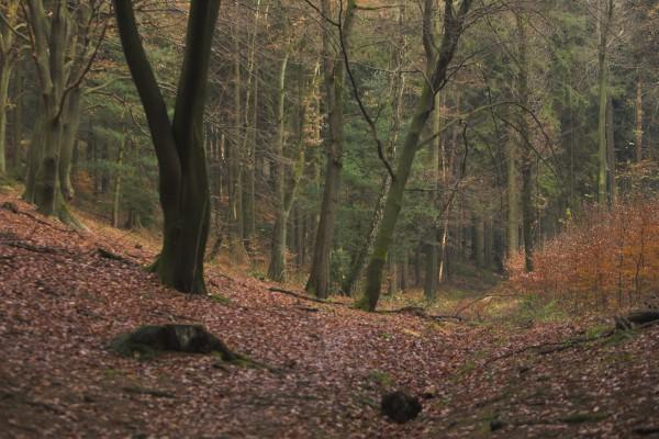 Un gran bosque en otoño