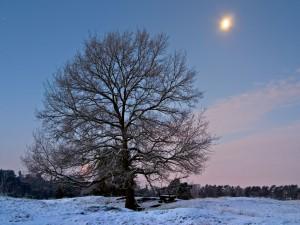 Árbol en la nieve