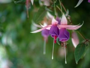 Delicadas flores boca abajo