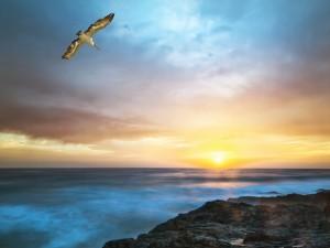 Pelícano volando sobre el mar