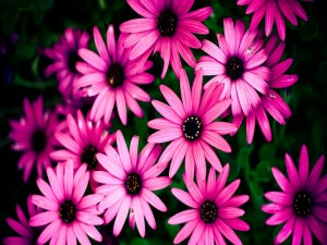 Postal: Grupo de flores rosas