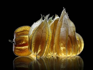 Postal: Cáscaras de frutos iluminadas