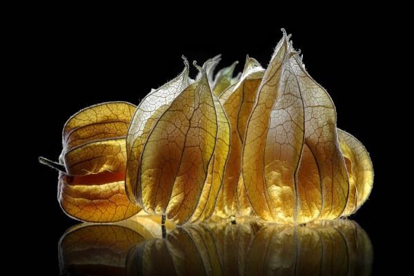 Cáscaras de frutos iluminadas