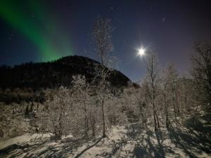 Noche brillante con estrellas