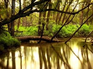 Postal: Árboles dentro del agua