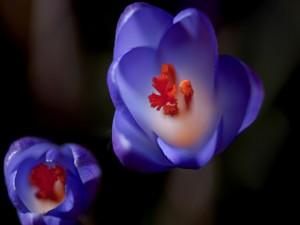 Postal: Interior de dos bonitas flores