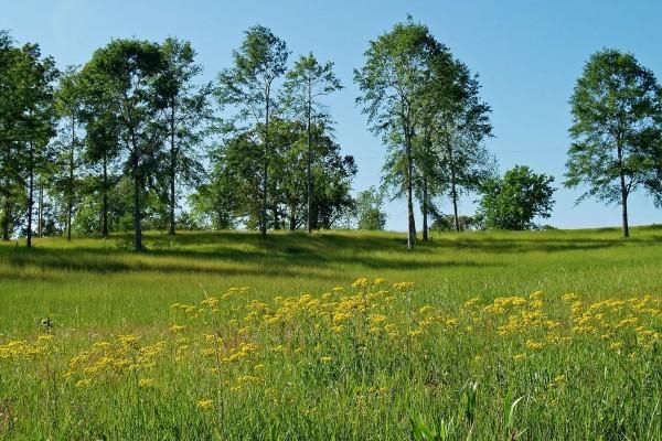 Árboles en un campo verde con flores