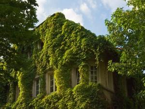 Postal: Plantas trepadoras cubriendo la casa