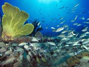 Banco de peces bajo el mar