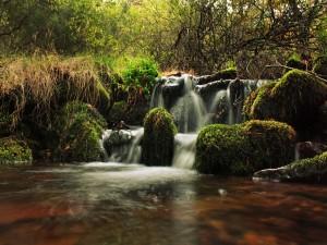 Postal: Pequeñas cascadas (Dehesa del Moncayo, España)