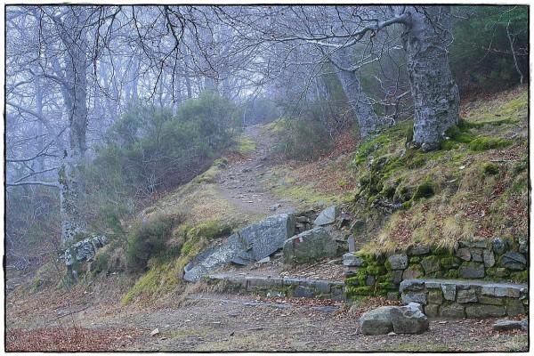 Ruta de senderismo con niebla en Moncayo