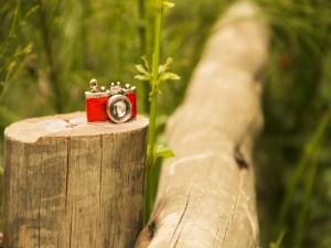 Postal: Cámara roja sobre el tronco