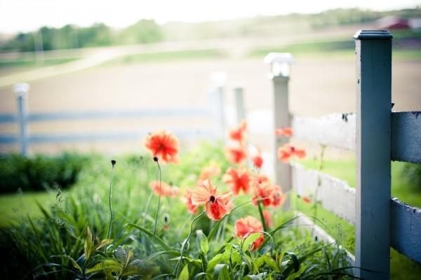 Flores silvestres rojas