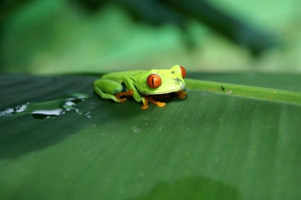La rana verde y la hormiga