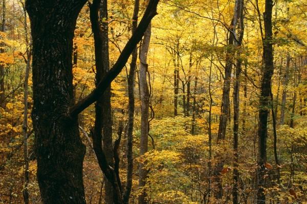 Árboles otoñales en el bosque