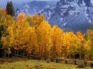 Postal: Montañas y árboles en otoño