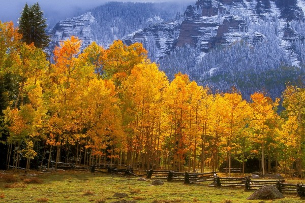 Montañas y árboles en otoño