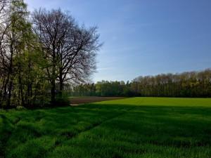 La sombra de los árboles sobre la hierba verde