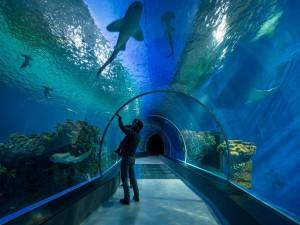 Visita al acuario
