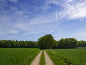Postal: Camino de tierra en una zona verde