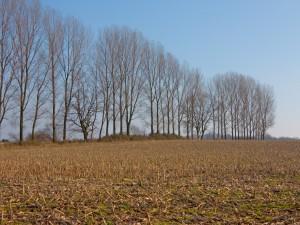 Postal: Árboles y un suelo con ramas rotas