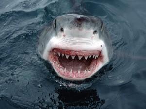 Postal: La boca del tiburón