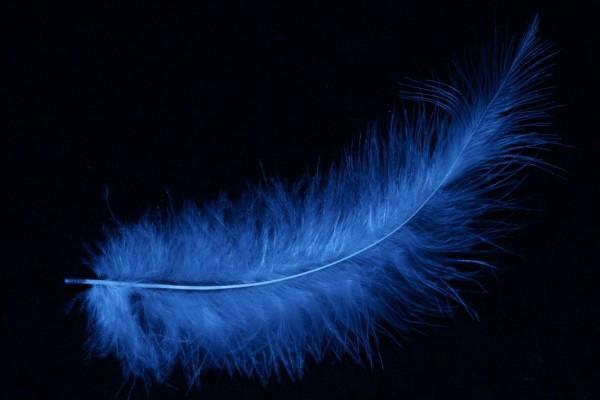 Una pluma azul
